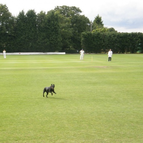 Cricket match reports from weekend 5th / 6th August